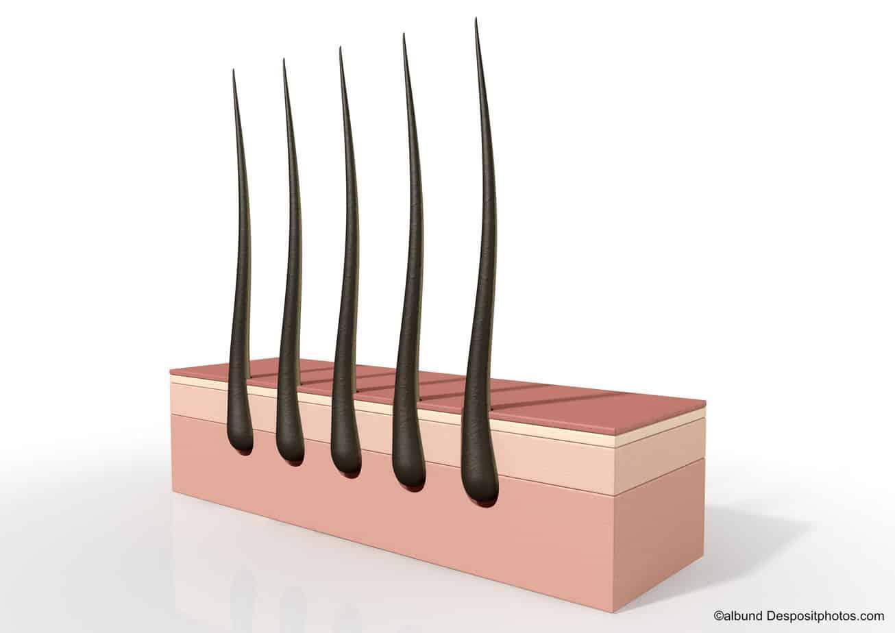 Trichogramm Haare